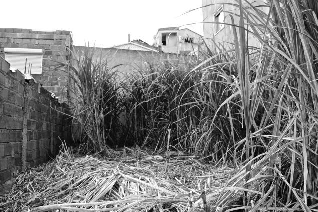 Cultivo substitui habitação, Cova da Moura