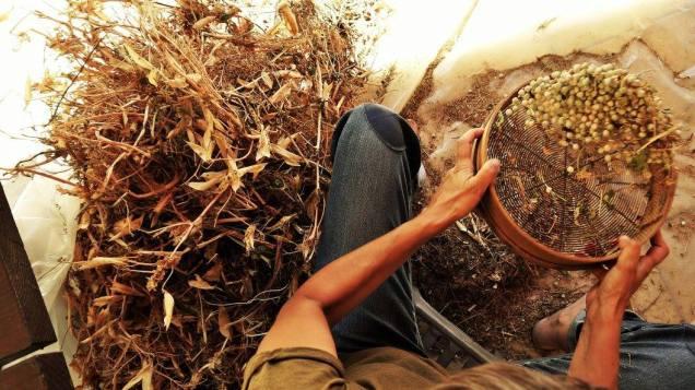 2.Peneirar-sementes_PepaBernardes